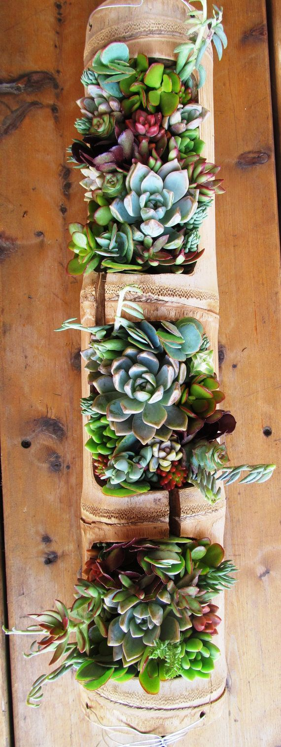 Suculentas en colgador de bambú arte vivo por SucculentSolutions                                                                                                                                                                                 More