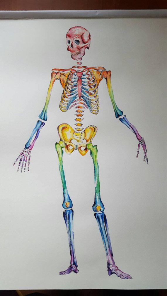 Watercolour Anatomy Art Complete Skeleton