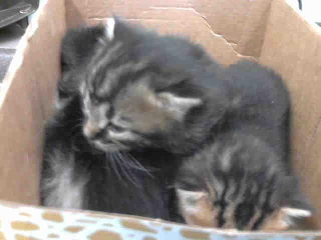 Animal Shelter Kittens Bradenton