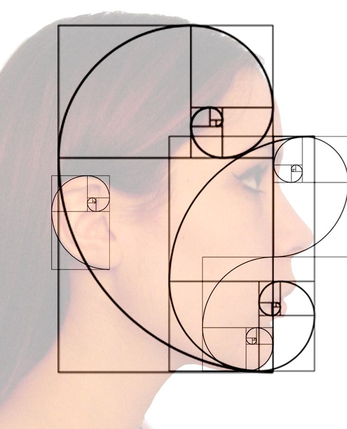 Fibonacci beauty.  The Golden Mean, as seen in human facial proportion
