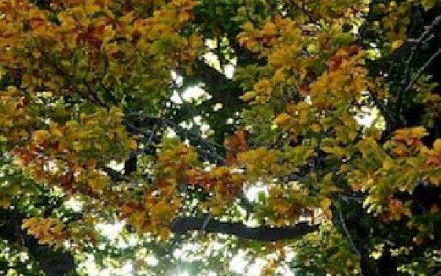 Il bosco lussureggiante incastonato nella vita #bosco #vita #yoga #graal