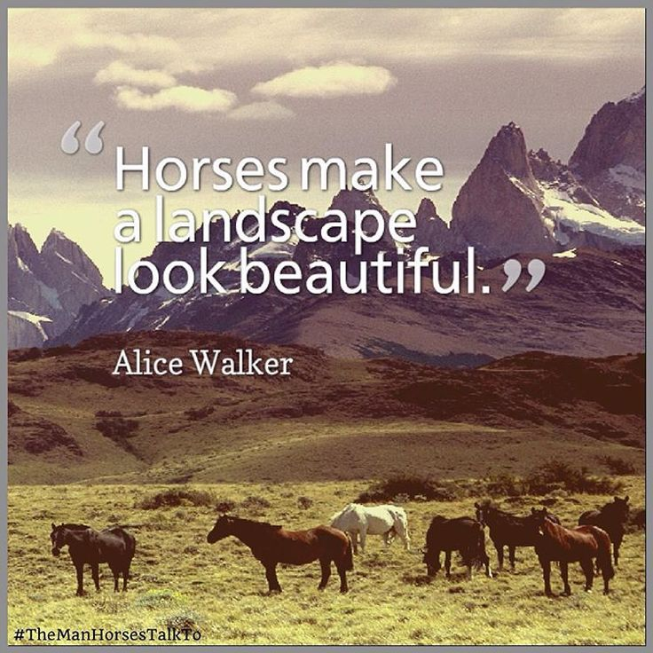 """Horses make a landscape look beautiful."" -Alice Walker"