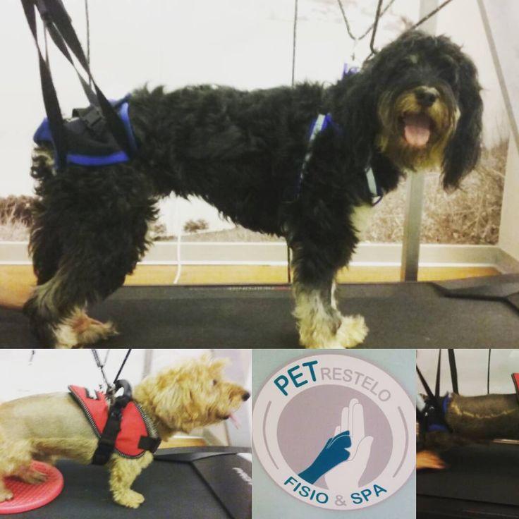 www.fisiospa.pt Exercicio em passadeira Treadmill