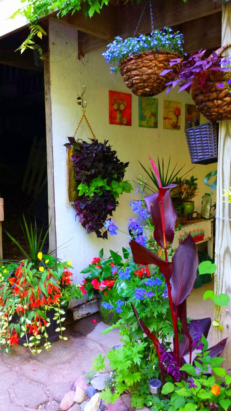 Sweet potato plant hanger to brighten up a shady spot!