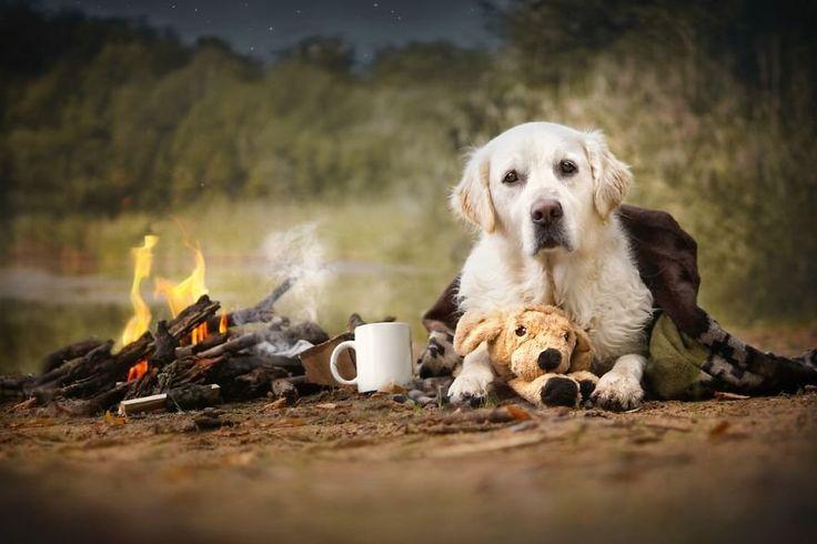 http://lotusz.cafeblog.hu/2015/10/06/szivmelengeto-oszi-kepek-kutyusokkal/ #dog #autumn