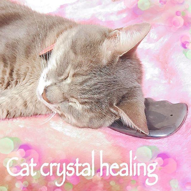 ✨クリスタルヒーリングのお話を✨ ルナ完全に寝ました😍🐱💕 テラヘルツは安眠にも良いって言うから気持ち良いのかしら? 楽しい夢見てくれてたら嬉しいな〜🎵 ああそうそう私の体験談としては私は腸がとても弱いのですがこのかっさを置いて寝るようになってから調子が良いです。 引き続き身をもって実験してみます✨✨✨ #lunasalagallery #lunasala#cat #mycat #love #crystalhealing #crystalanimalhealing #goodsleep #cute#helth#beauty #癒し#可愛い#猫#愛猫#健康 #美容 #かっさ #テラヘルツ#クリスタルアニマルヒーリング #クリスタルヒーリング #ルナ#猫分補給 #安眠#夢