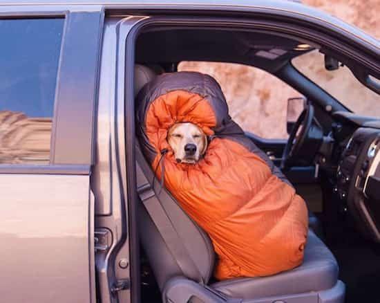 chien emmitouflé dans un sac de couchage