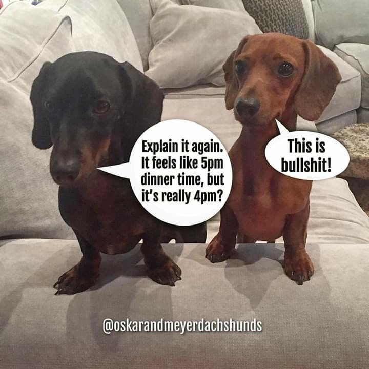 Daylight Savings Time Really Messes With Their Tummies Funny