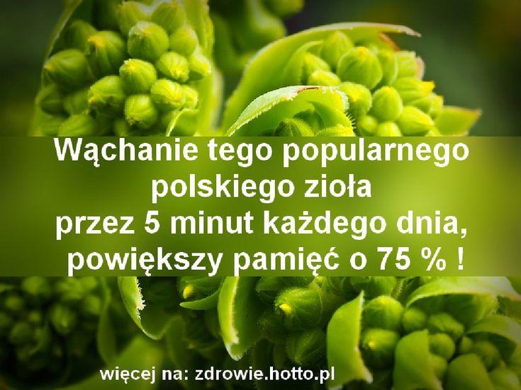 Wąchanie tego zioła przez 5 minut każdego dnia, powiększy pamięć o 75 % !