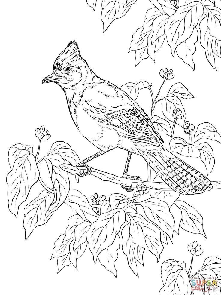 157 best Color Birds images on Pinterest Coloring books