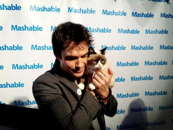I don't know who's more adorable.......: Embedded Image, Funny Cats, Grumpycat, Ian Somerhalder, Grumpy Cat, 2013 Sxsw, Cat 3 10 13