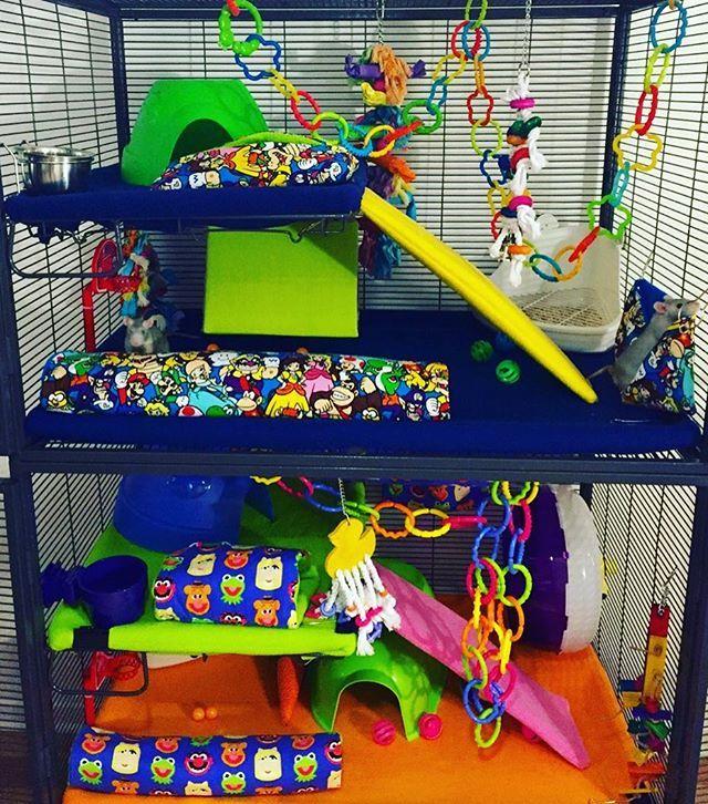 New cage set up for our babies ❤️ Check links in bio and custom-create your own cage accessories  #dumborat #babyrat #instarat #siamese #petrat #petbed #tube #mouse #mice #hamster #pouch #hammock #rats #rattiegram #ratties #rattie #gerbil #chinchilla #etsyshop #etsyseller #gerbil #chinchilla #guineapig #ratstagram #ratcommunity #hammock #hedgehogsofinstagram #instaferret #ratsofinstagram #cage #ratsofig #handmade #handmadewithlove