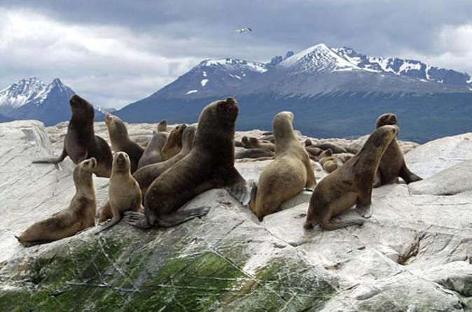 Beagle Channel Sailing Tour Islands Penguins And Estancia