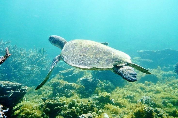 See turtles in Exmouth, Western Australia