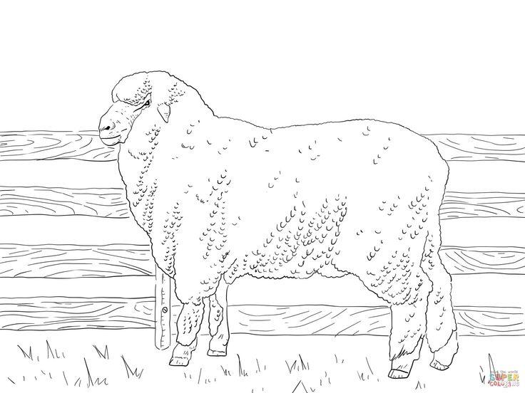 22 besten Sheep Coloring Pages Bilder auf Pinterest | Frei ...