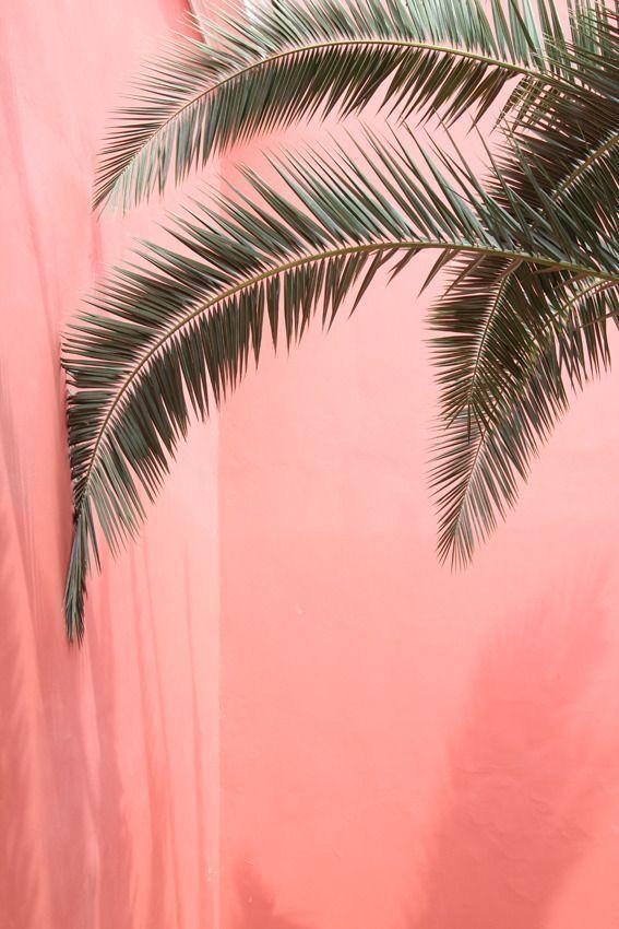 Palmen rosa Hintergrund