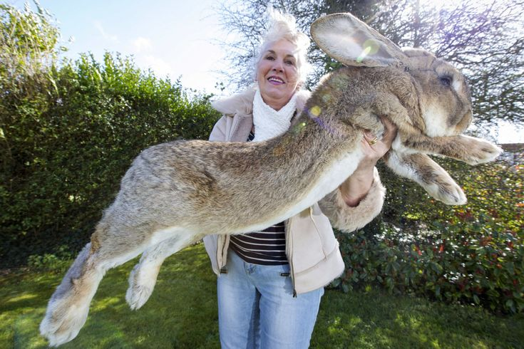 The World's Largest Rabbit Is Facing Competition From His Giant Son  - CountryLiving.com