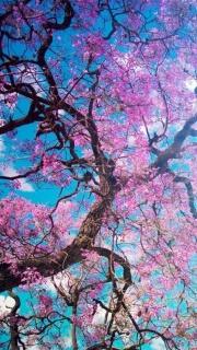 Flowering tree so pretty