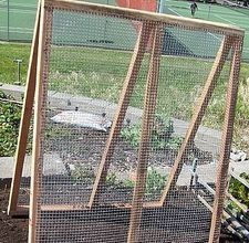easy-to-build A-frame trellis to support cucumbers, small melons, gourds and sugar snap peas. Then, plant crops that prefer cooler temperatures, including cilantro, lettuce and spinach in the space underneath the A-Frame.: