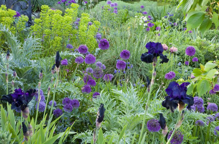 Beautiful planting combination from Sue Townsend Garden Design - Allium, Iris and Euphorbia