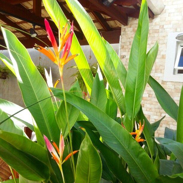 Deck/varanda goumert no condomínio Carmel Design, Detalhe para a pacavira, Heliconia psittacorum, planta ornamental nativa, completa o deck que ficou bem tropical trazendo a Brasilidade em seu paisagismo. #Paisagimo #Landscaping #AmbientalDesign #Work #FranklinMaia #GeorlandoPinheiro #CarmelDesign #AmoSerPaisagista #Brasilidade #Design #Pacavira #Heliconiapsittacorum #Jardins #PaisagismoFortaleza