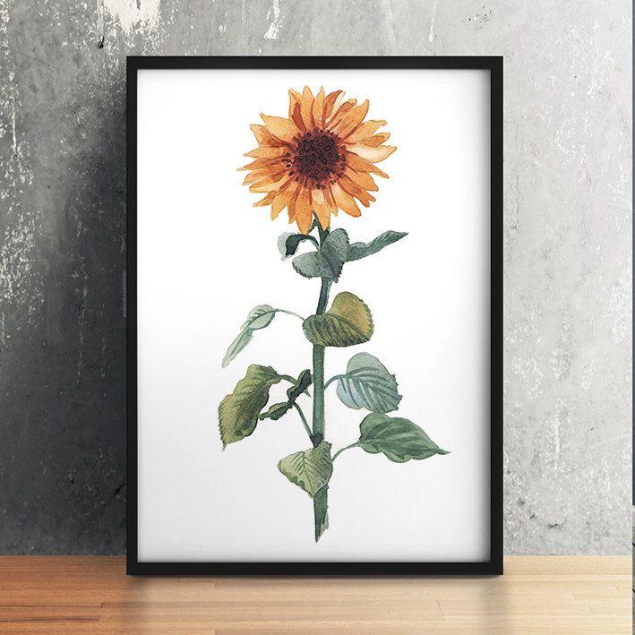 Farmhouse decor Sunflower print Botanical poster Flower art Watercolor print ACW635 by DeerAndBadgers on Etsy https://www.etsy.com/listing/262237997/farmhouse-decor-sunflower-print