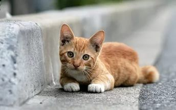 Help for cats https://gogetfunding.com/help-save-the-cats/