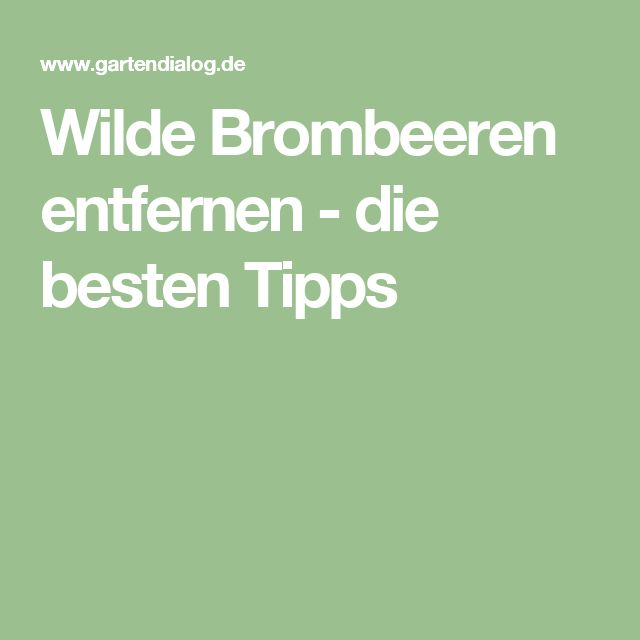 Wilde Brombeeren entfernen - die besten Tipps