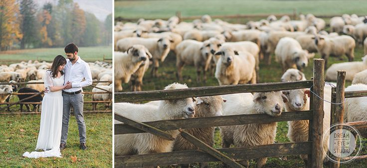 Wedding_session_couple_love_dawn_cute_sheep