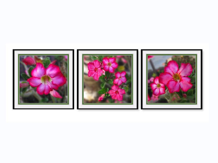 "Desert Rose Wall Grouping. Three 12""x12"" Vibrant Floral Inspirations With Printed Coordinated Faux Mats. Frame Ready. Saturated Colors. by VintageArtForLiving on Etsy https://www.etsy.com/listing/528145351/desert-rose-wall-grouping-three-12x12"