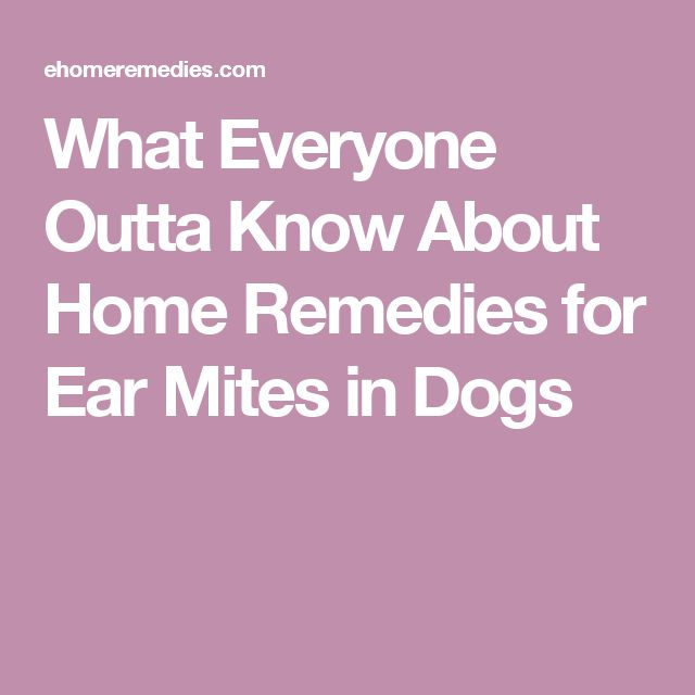 Ear Mites Cats Homeopathic Remedies