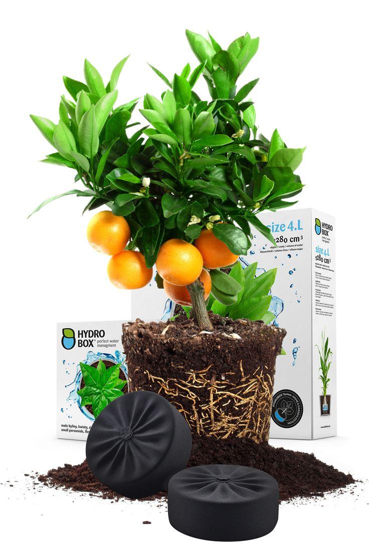 Rewolucja w nawadnianiu - Hydrobox. #hydrobox #hydroboxpl #kwiaty #nawadnianie #diy #ideas #woda #flowers #flower
