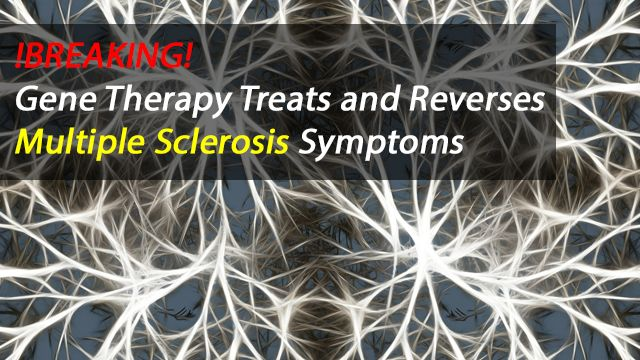 Gene Therapy Treats and Reverses MS Symptoms in Mouse Model