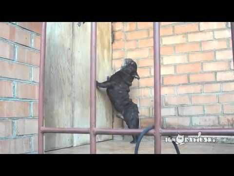 funny dogs talking: Open the door