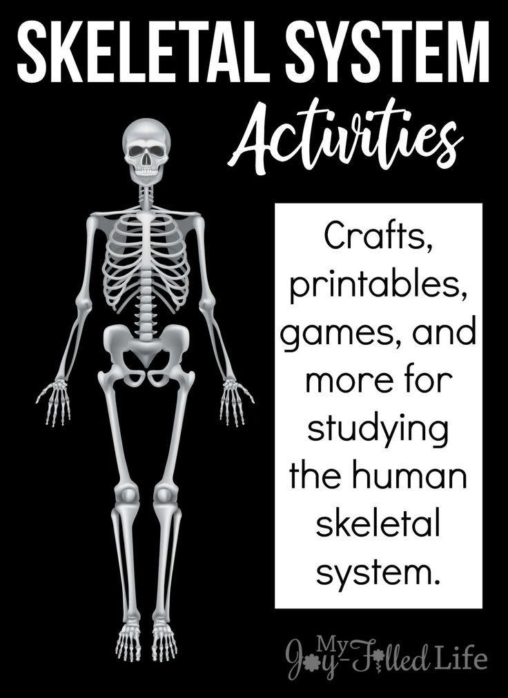 Skeleton Game 1 - Anatomy - Health - Sheppard Software
