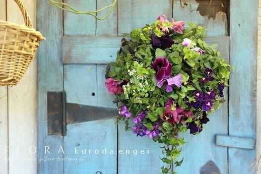 ヒヤシンスの寄せ植え の画像|フローラのガーデニング・園芸作業日記