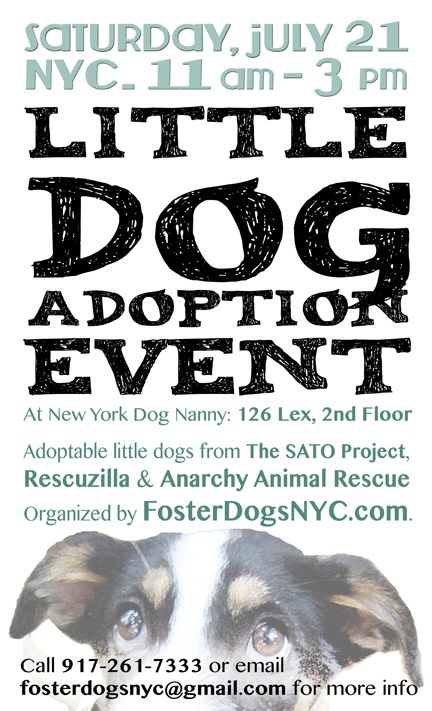 Foster Dogs NYC Little Dog Adoption Event July 21 2012