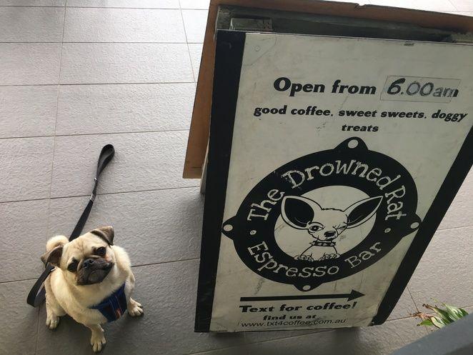 drowned rat espresso, drowned rat, coffee, breakfast, brunch, dog friendly, beach, redcliffe, moreton bay, clontarf, promenade, brownie, piano, books, cafe, restaurant, kid's corner, dog friendly
