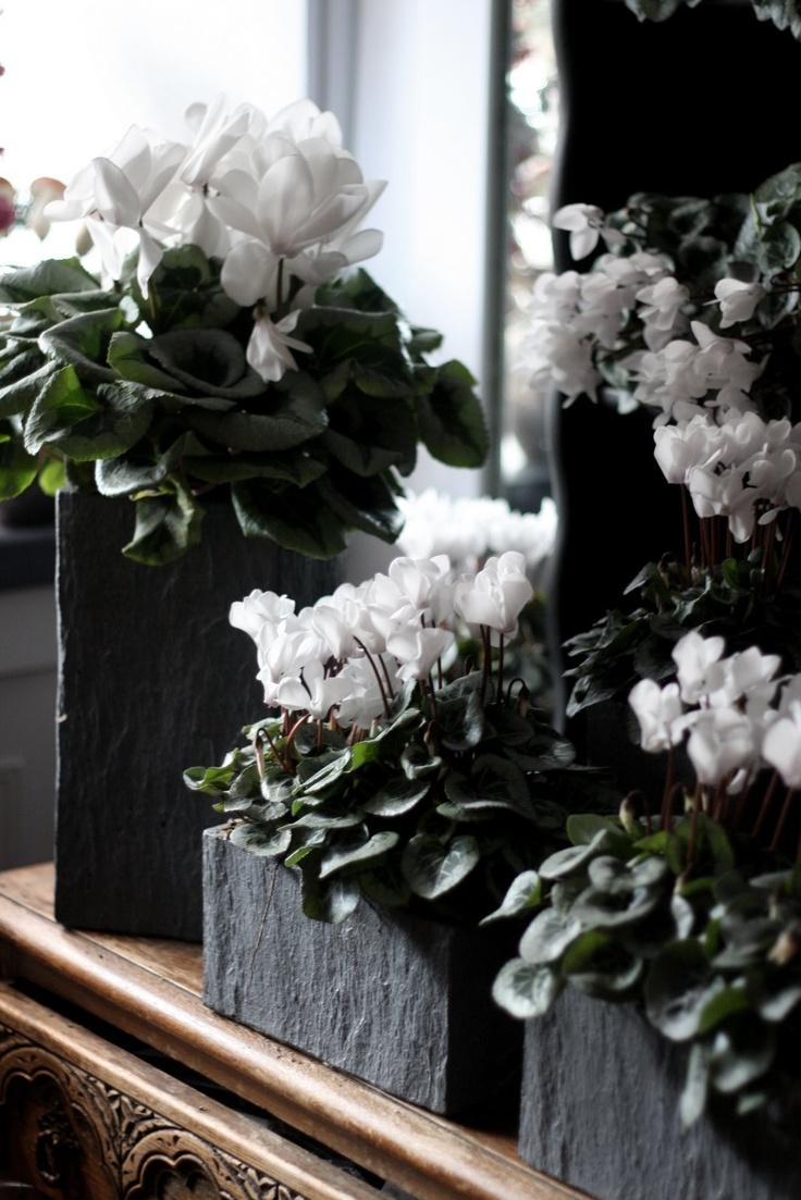 67 Best Indoor Gardens Images On Pinterest Succulents