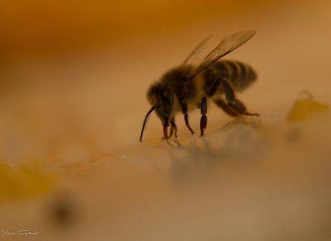 Honey on ice