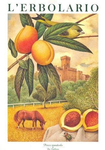 Calendario 1999 L'Erbolario - Acquerelli di Franco Testa