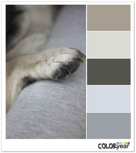 Colors, Coloryear, pet, pug,