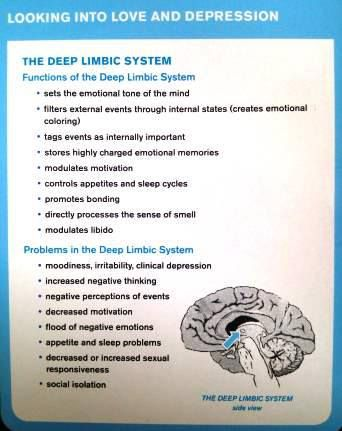 Looking into Love and Depression.  This is from Dr. Daniel Amen. http://www.amenclinics.com/