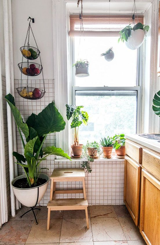 Tiny kitchen still has room for the essentials and big plants.