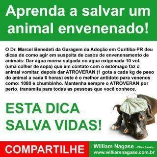 Aprenda a Salvar um Animal Envenenado
