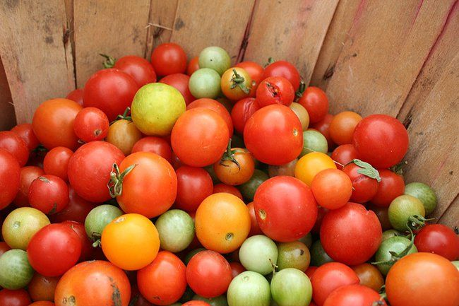"""What's the Difference Between """"Indeterminate"""" and """"Determinate"""" Tomatoes? : TreeHugger"""