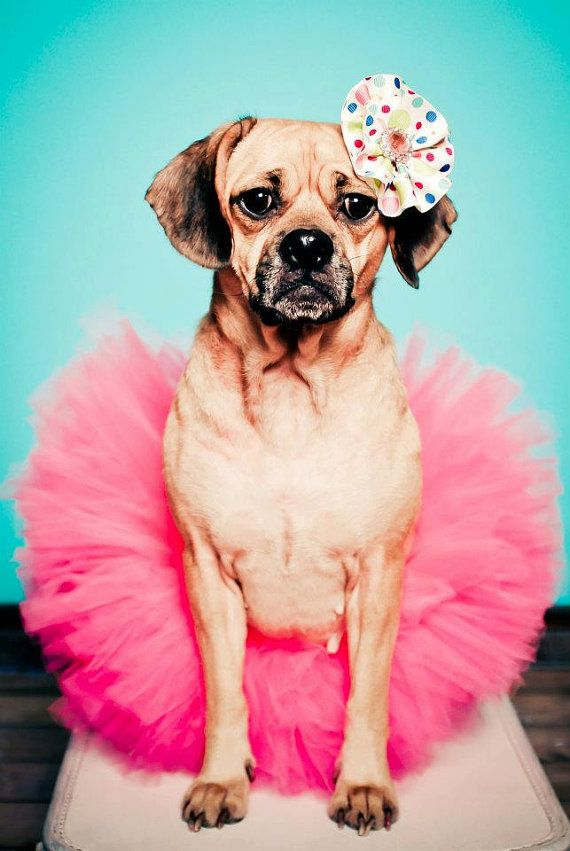 Dog Tutu Puppy Tutu Pet Photography Prop by EllaBooCouture on Etsy, $20.00