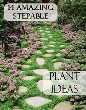 14 Amazing Stepable Plant Ideas ~ These are low creeping perennials that look great between rocks on a pathway and are soft to the touch much like moss.
