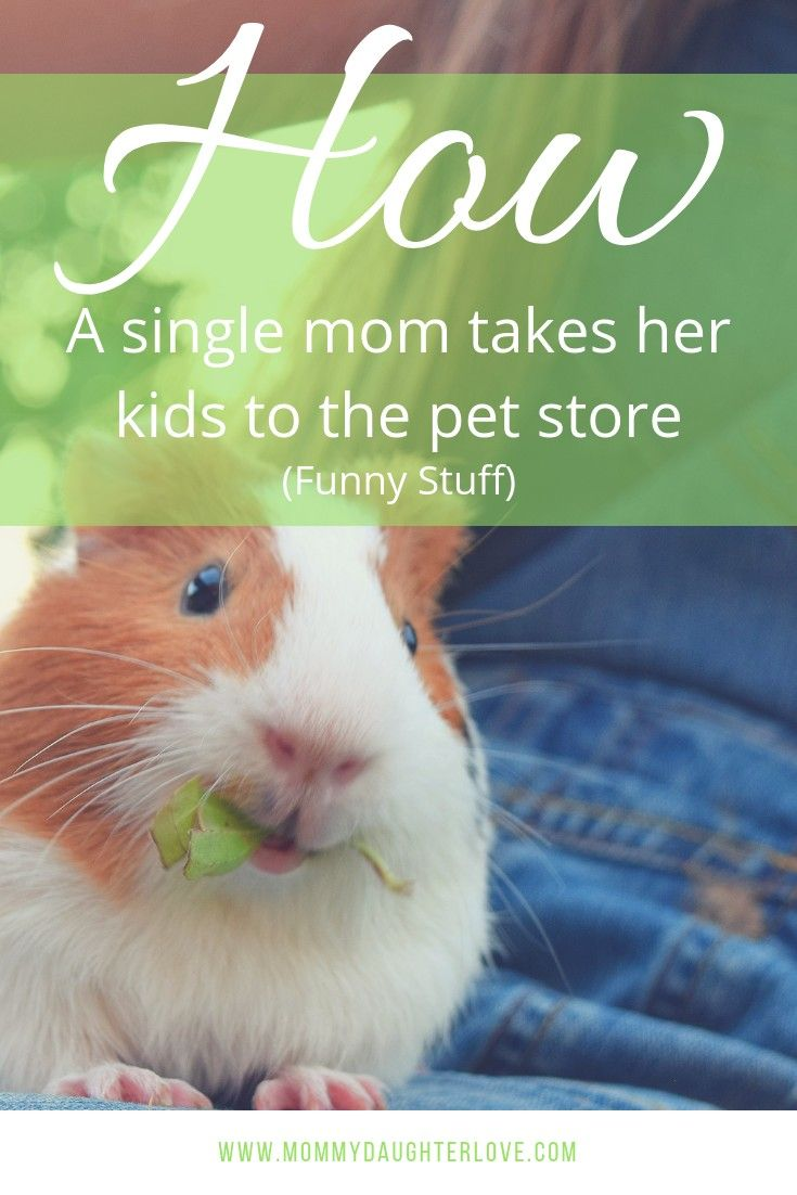 The Pet Store Chronicles Best Pets For Kids Pet Store Animals For Kids