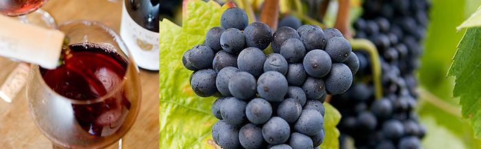 SALWEY's Great Pinot Noir from Germany.